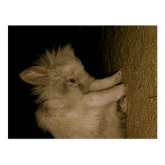 kandinsky bunny post cards