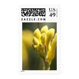 Kanga amarillo sellos