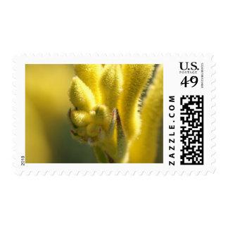 Kanga amarillo envio