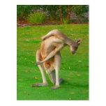kanga post cards