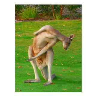 kanga stretch postcard