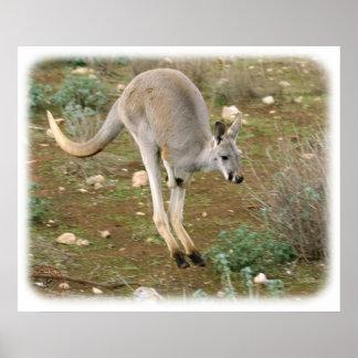 Kangaroo 9L10D-21 Poster