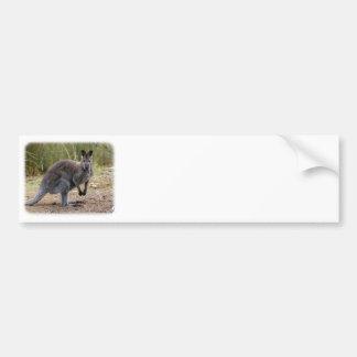 Kangaroo 9Y344D-186 Car Bumper Sticker