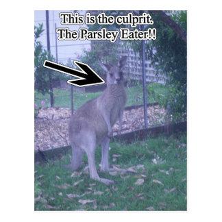 Kangaroo AKA Parsley Thief Postcard