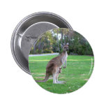 Kangaroo and Joey Pinback Button