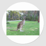 Kangaroo and Joey Sticker