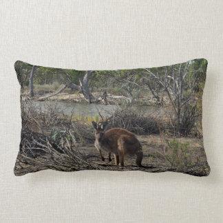 Kangaroo At The Billabong, Lumbar Cushion. Lumbar Pillow