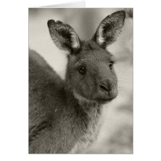 Kangaroo at Warrawong Sanctuary South Australia Card