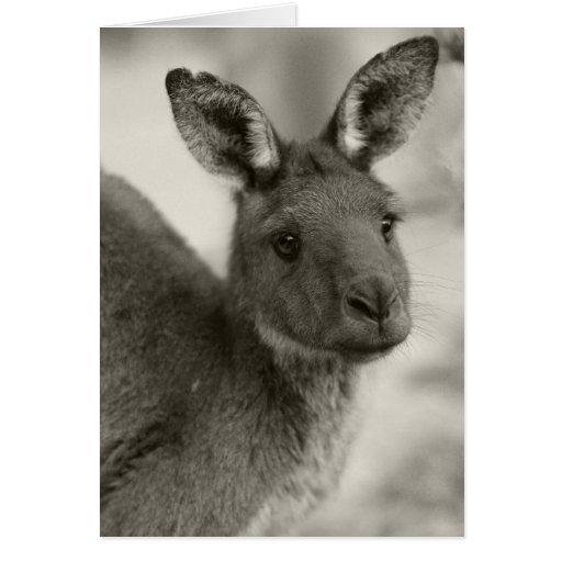 Kangaroo at Warrawong Sanctuary South Australia Greeting Card