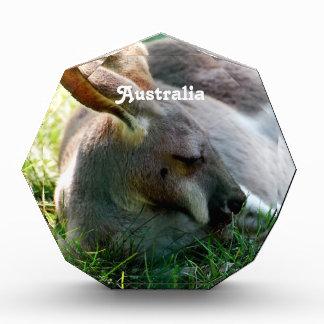 Kangaroo Acrylic Award