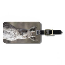 Kangaroo Bag Tag
