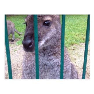 Kangaroo behind bars postcard