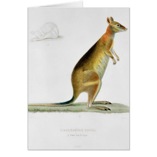 Kangaroo, engraved by Coutant Card