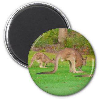 kangaroo fam 2 inch round magnet