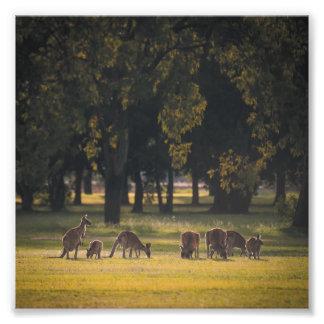 "Kangaroo Family Dinner 6x6"" Photo Print"