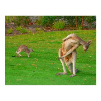 kangaroo family postcard
