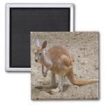 Kangaroo Fridge Magnet