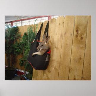Kangaroo In a Bag Poster