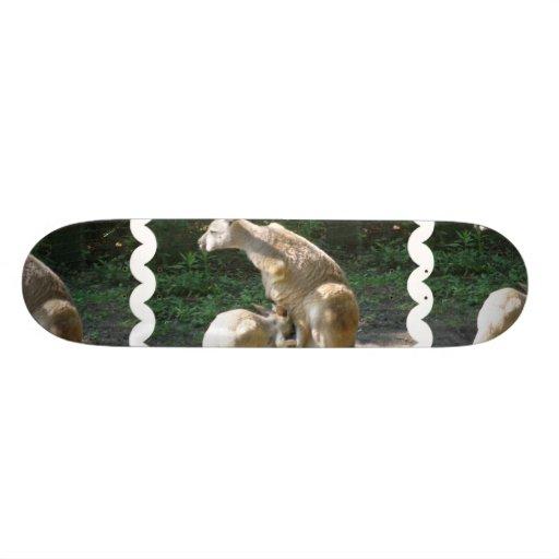 Kangaroo Joey  Skateboard