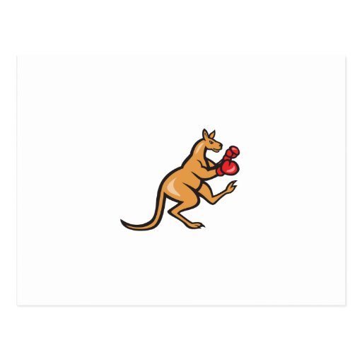 Kangaroo Kick Boxer Boxing Cartoon Postcard
