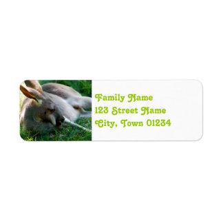 Kangaroo Return Address Label