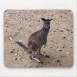 Kangaroo Looking at the Camera Mousepads