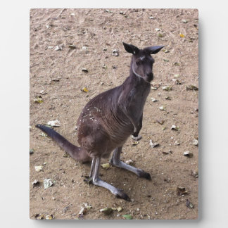 Kangaroo Looking at the Camera Plaque