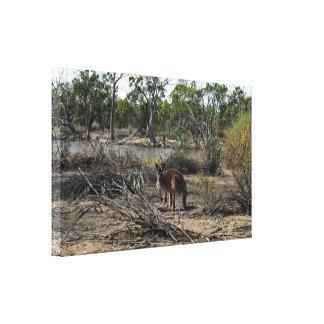 Kangaroo Meanwhile At The Billabong, Canvas Print
