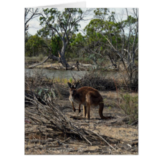 Kangaroo, Meanwhile At The Billabong, Card