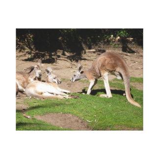 Kangaroo mob canvas print