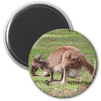 Kangaroo, Outback Australia Magnet