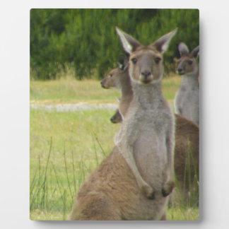 Kangaroo Paddock Plaque