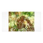 Kangaroo Paw Customized Photo Card