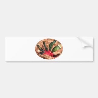 Kangaroo paw  flower in bloom (oval) bumper sticker