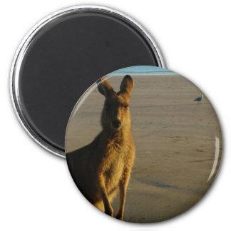 Kangaroo Photo Magnet Magnets