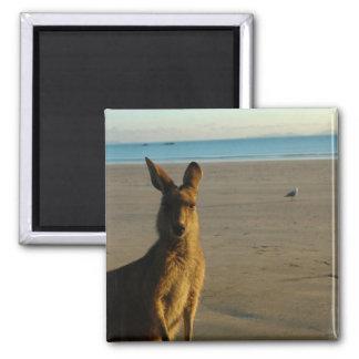 Kangaroo Photo Magnet Magnet