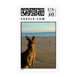 Kangaroo Photo Postage Stamp
