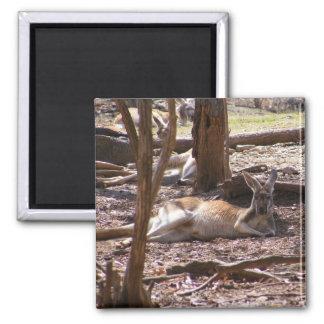 Kangaroo Picnic Fridge Magnet