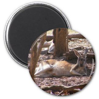 Kangaroo Picnic Fridge Magnets