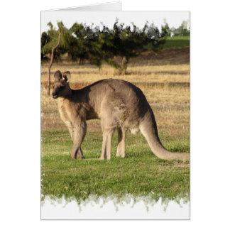 Kangaroo Picture Greeting Card