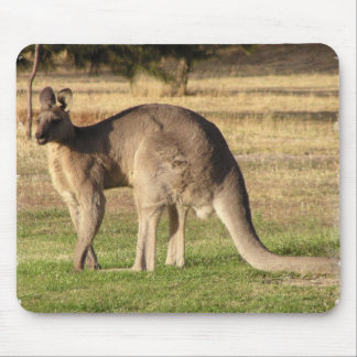 Kangaroo Picture Mouse Pad