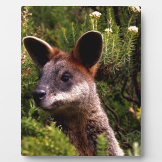 Kangaroo Plaque