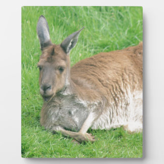 Kangaroo Photo Plaque