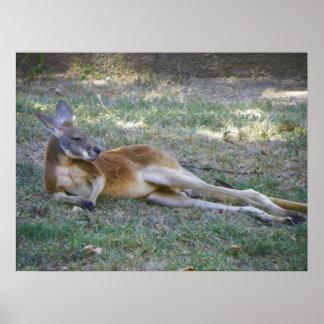 kangaroo posing like a playboy model poster