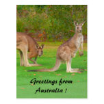 kangaroo post card