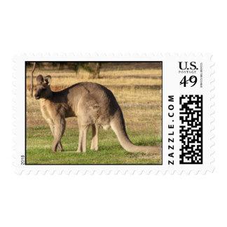 Kangaroo Postage Stamp