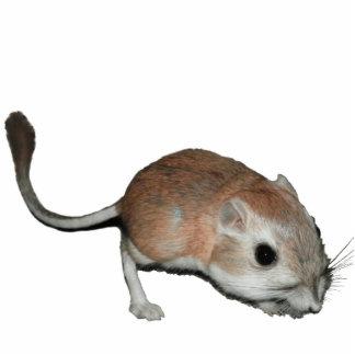 Kangaroo rat photo cut outs