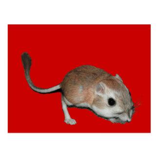 Kangaroo rat postcard