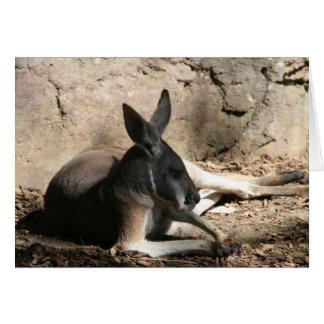 kangaroo relaxed card