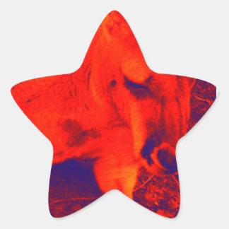 Kangaroo Star Sticker